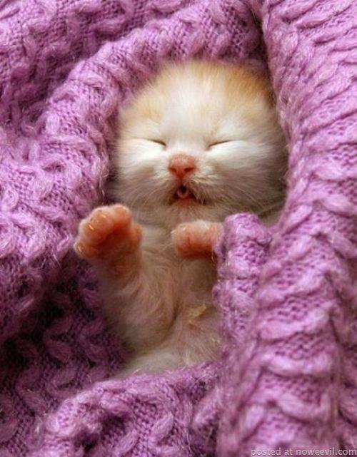 baby kitten 2