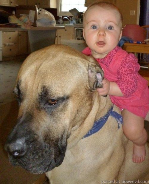 baby on dog