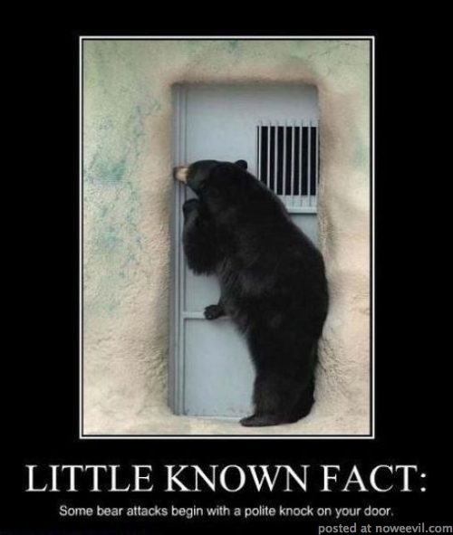 bear attack fact