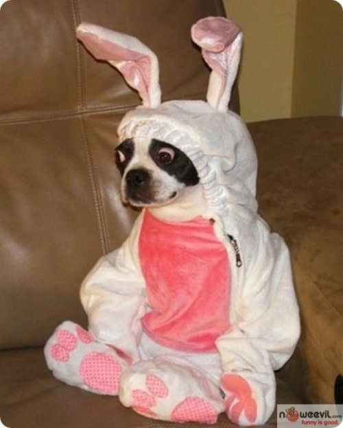 dog in bunny costume