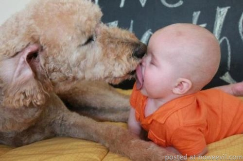 dog licking baby face
