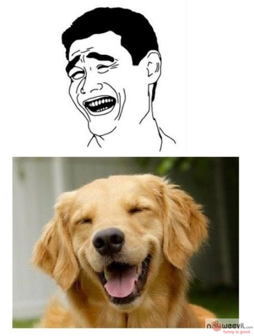 dog meme 1