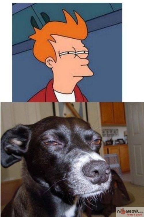 dog meme 2
