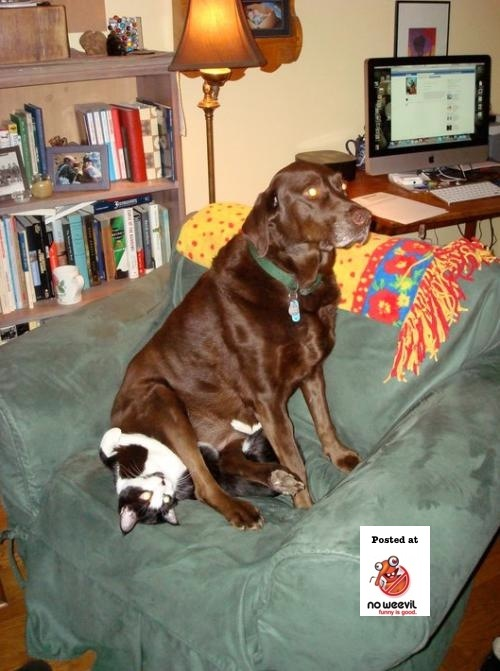dog sitting on cat