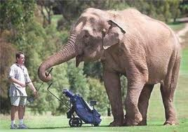 elephant caddy