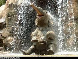 elephant in falls