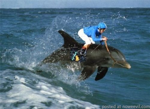 photoshop dolphin