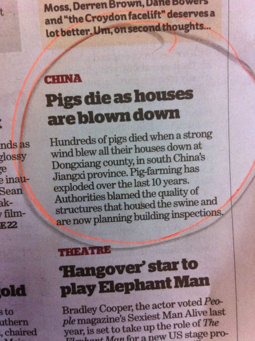 pigs die as house blown down