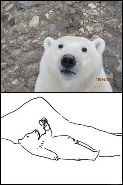 polar bear taking self portrait