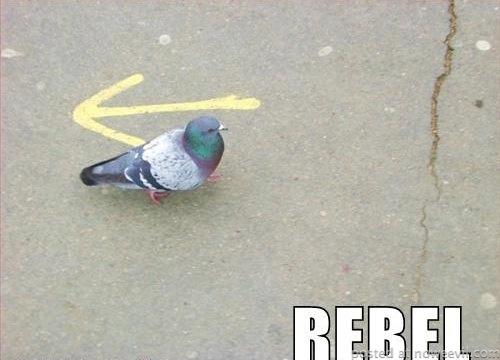 rebel 5