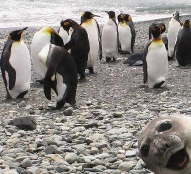 seal photobomb