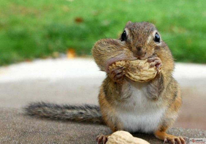 squirrell and nut