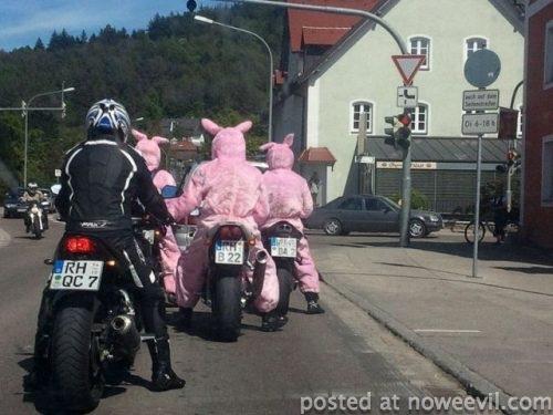 three pigs on bikes