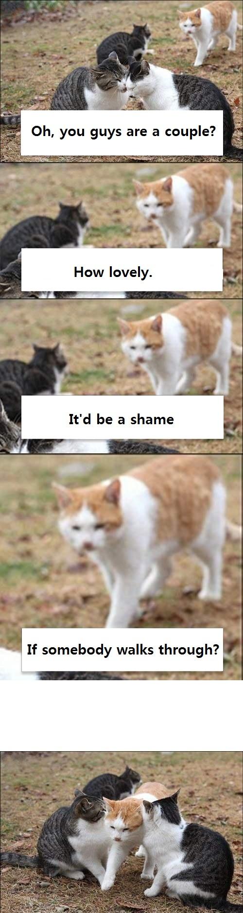 anti pda cat