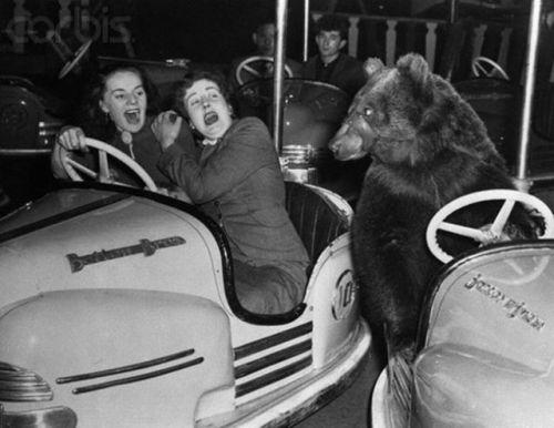 bear derby