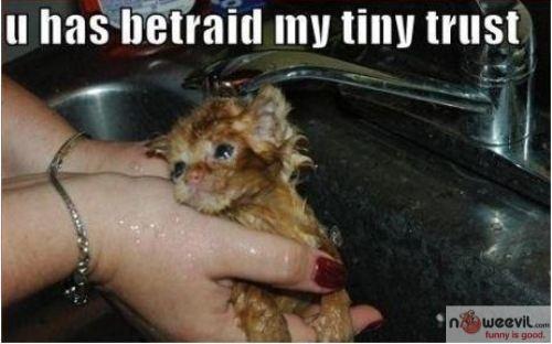 betrayed my trust
