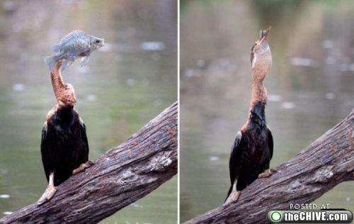 bird and fish owned