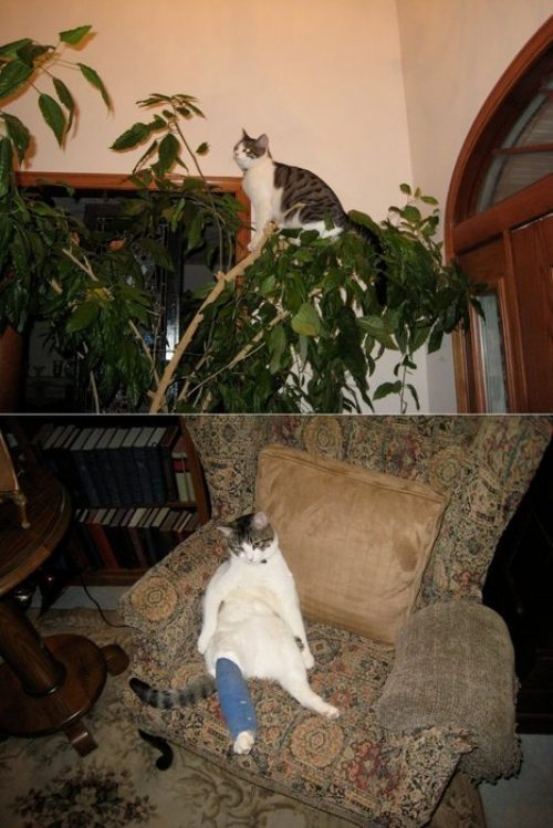 broken leg cat