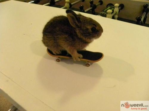 bunny skateboard