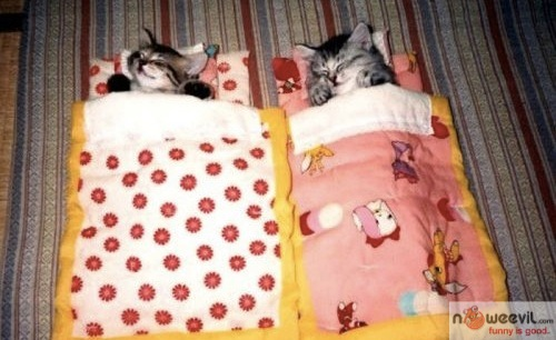 cats in sleeping bag