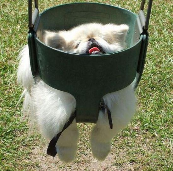 derp swing