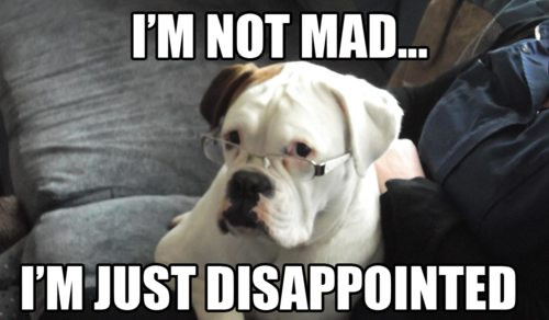 disappointed dog
