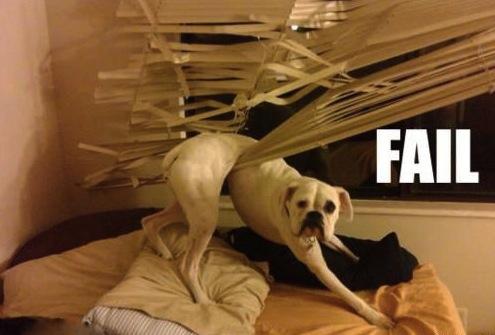 dog blinds
