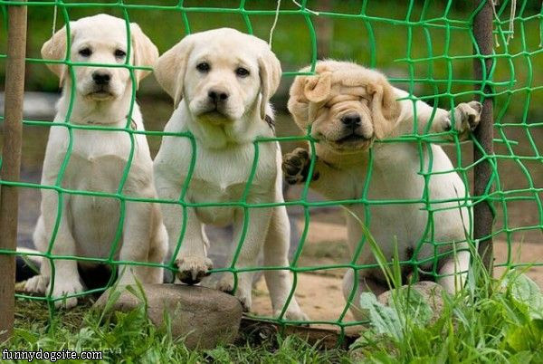 dog fence