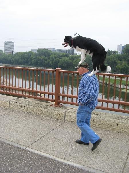 dog on shoulders