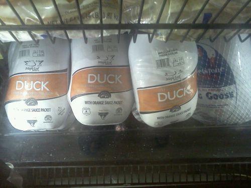 duck goose