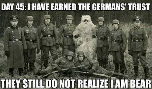 german bear
