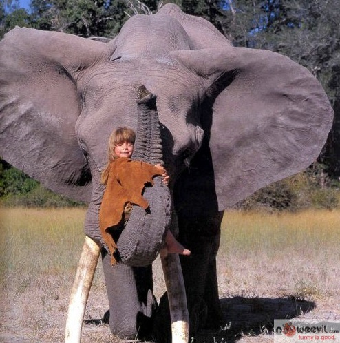 kid hugging elephant trunk