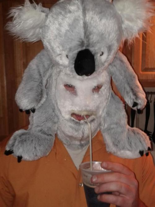koala head
