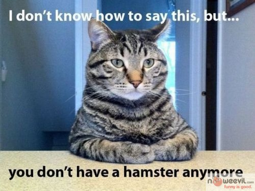 no more hamster