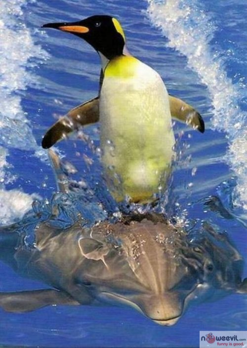 penguin and dolphin