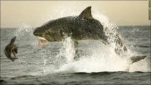 scary sharks 1