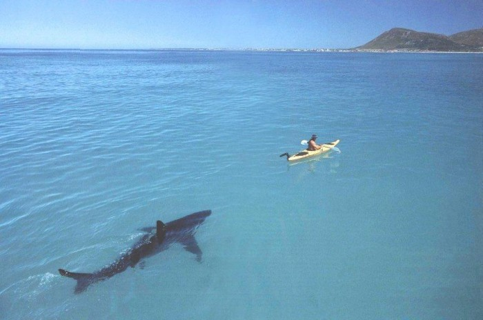 shark and kayak