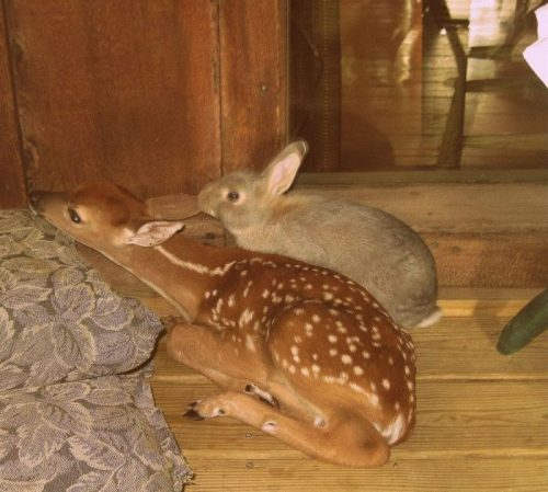 deer and rabbit
