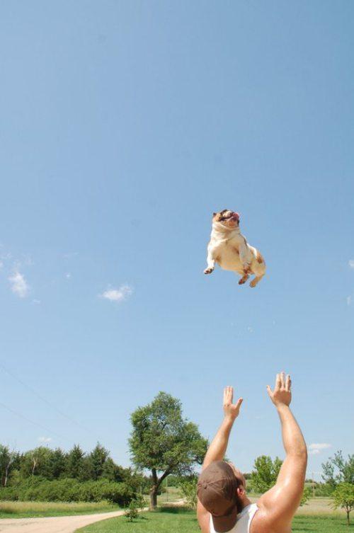 dog tos