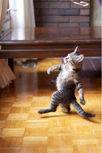 shuffling cat