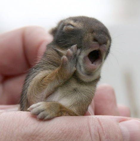 yawning bunny