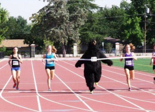 bear race