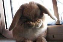 bunny hiding face