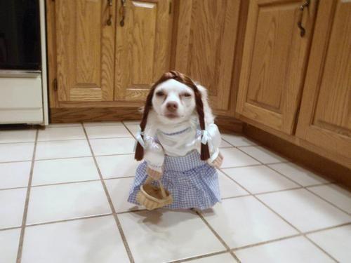 dog dressup