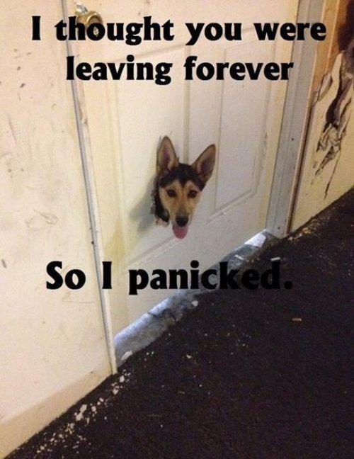 dog panic