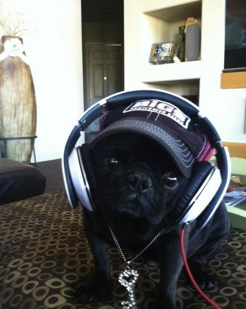 headset dog