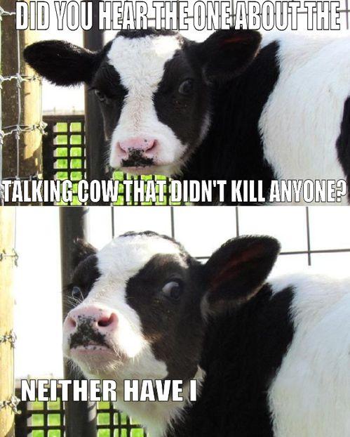 killer cow