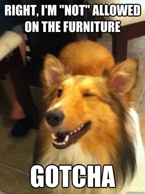 on furniture