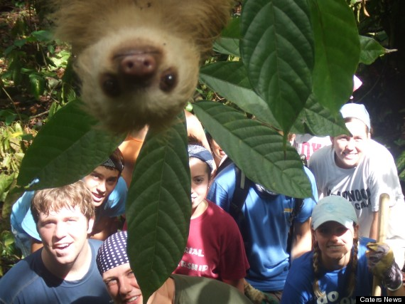 PIC FROM CATERS- (Pictured is the sloth hanging in front of the group) This is the moment a sloth gatecrashed a groups holiday snap in the jungle. The group of youngsters on an International Student Volunteers expedition from all over the world had been helping cut paths in the dense woodland on Costa Rica to allow researchers to get around. And after completing their back-breaking charity work, they decided to have a group picture taken as a keep sake. But what they didnt expect was this inquisitive sloth slowly lowering himself down into the frame as the group smiled for the camera. Manuel Ramirez, who is an anthropologist and tour guide for International student volunteers , had decided to take the snap, but he was not aware that a fame hungry sloth was waiting above.
