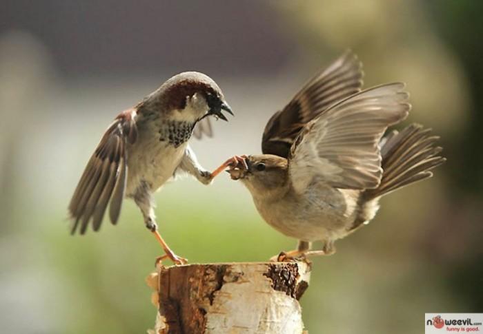 be quiet bird